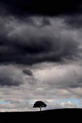 A tree and a storm sky
