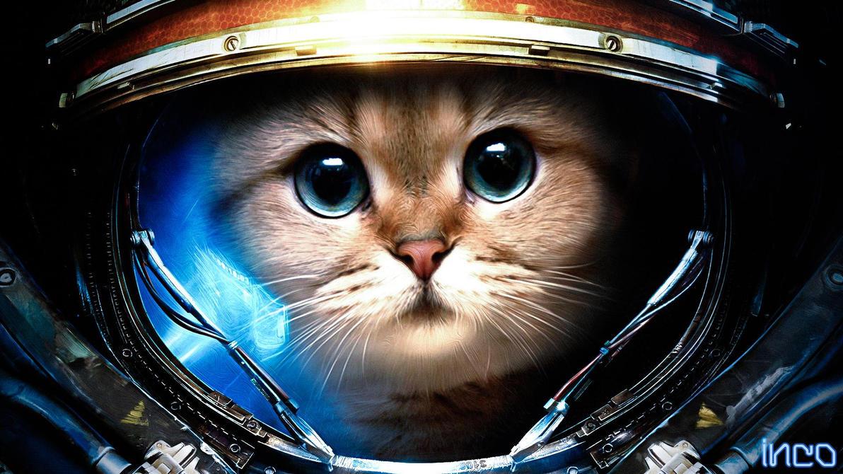 аватарки starcraft 2: