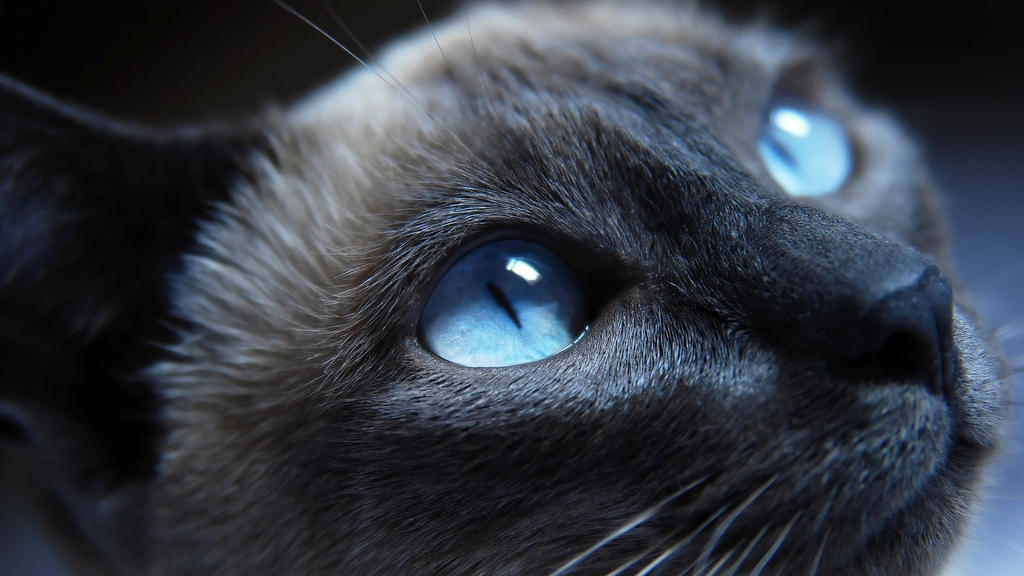 Cat Eyes by gawrifort
