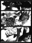 Butterflies by JustABeautifulDream
