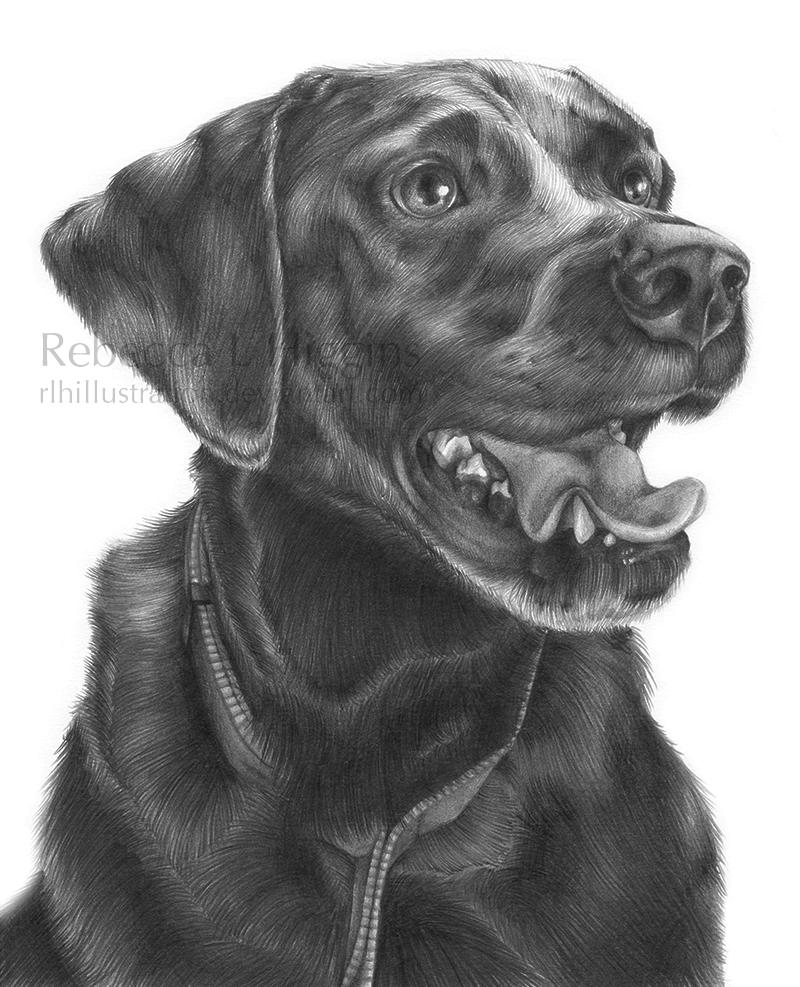 Brutus by rlhIllustration