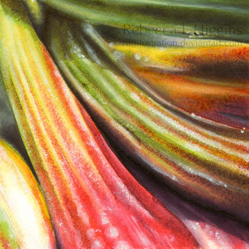Rhubarb by rlhIllustration