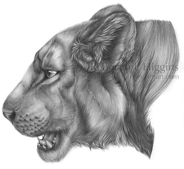 Lioness by rlhIllustration