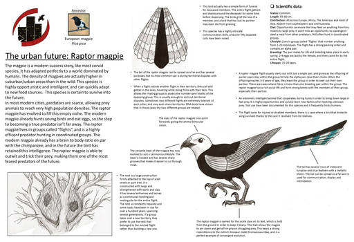 The urban future: Raptor magpie