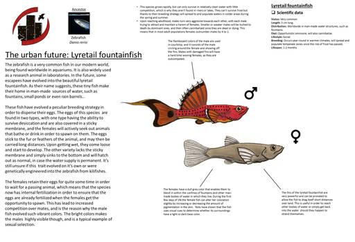Urban future - Lyretail fountainfish