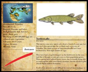 Encyclopedia of Aglaia - Northern pike