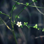 spring.. by BlueFish24