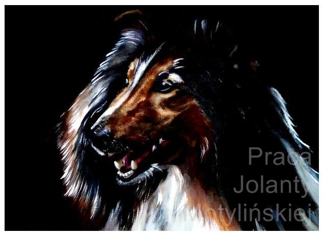Collie by jolabrodnica