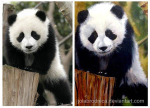 Giant Panda - photo and paint