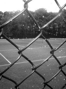Fence and Web
