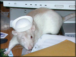 Rats in Hats - Sailor Leena by angelratdesigns