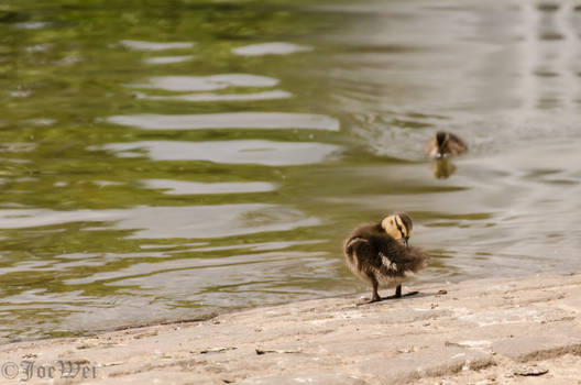 Clean up little duck