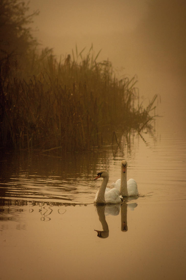 Swans From The Mists by Grunvald