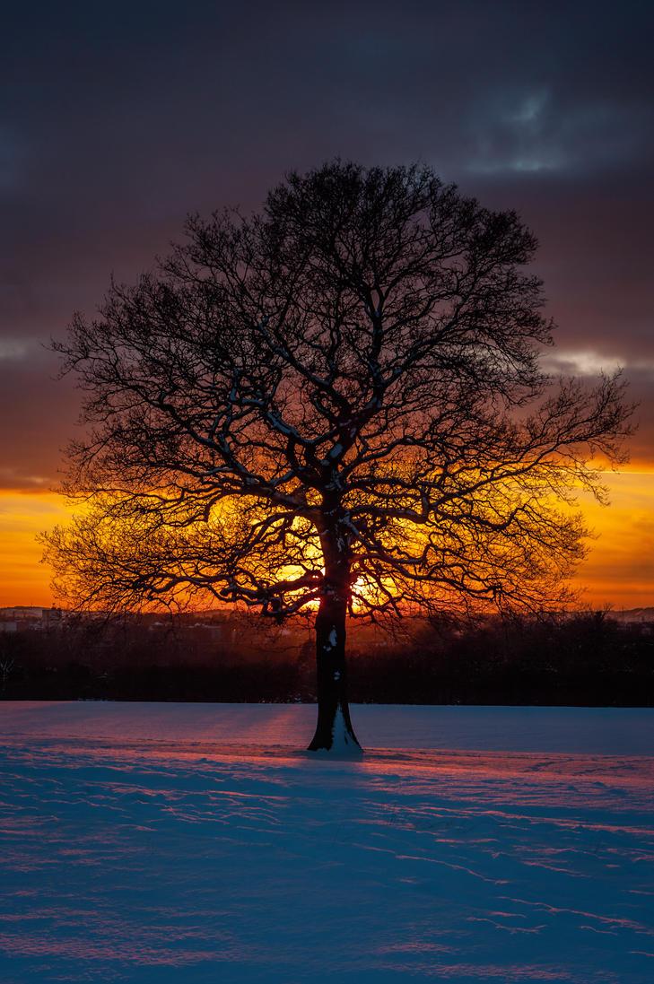 Winter Oak by Grunvald