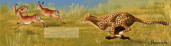 Cheetah by Zhaconda