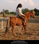 Horseback Archer 3 by syccas-stock
