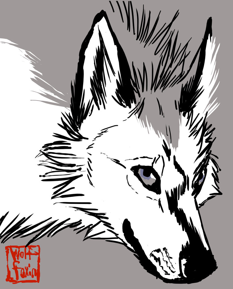 wolffoxin's Profile Picture