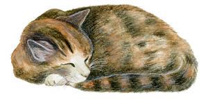 Sleeping Milla by Merylla