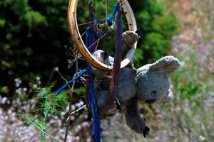Koala Wheel by phessler