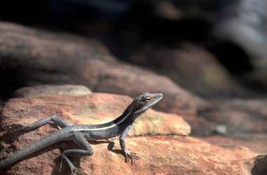 Lizard by retorrr