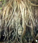 Buddha head by Harmonieduchaos