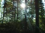 Lothlorien forest 149