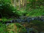 The valleys of Lothlorien 6