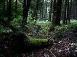 Dark Forest 6