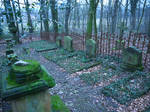 Graveyard in the forest 16