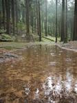 Rainy Forest BG