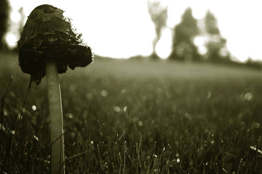 Lonely Shroom
