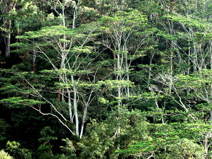 Rainforest by Denish-C