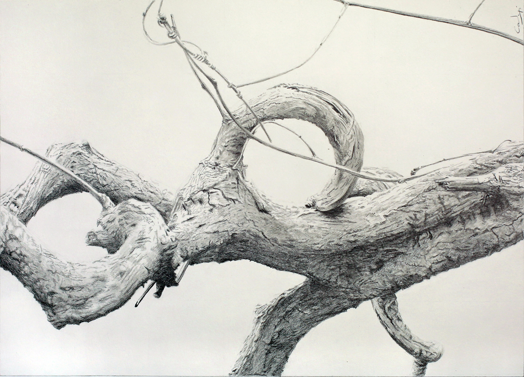 Pencil drawing: *Curling Wood Vine* by Denish-C