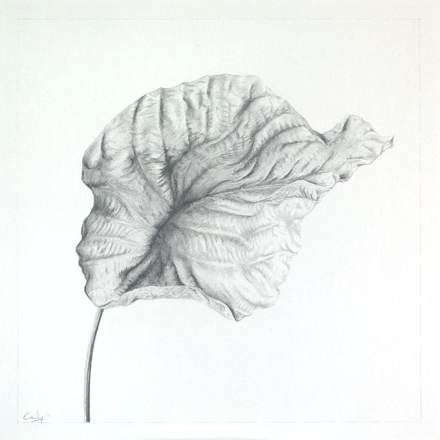 Dead Leaf by Denish-C