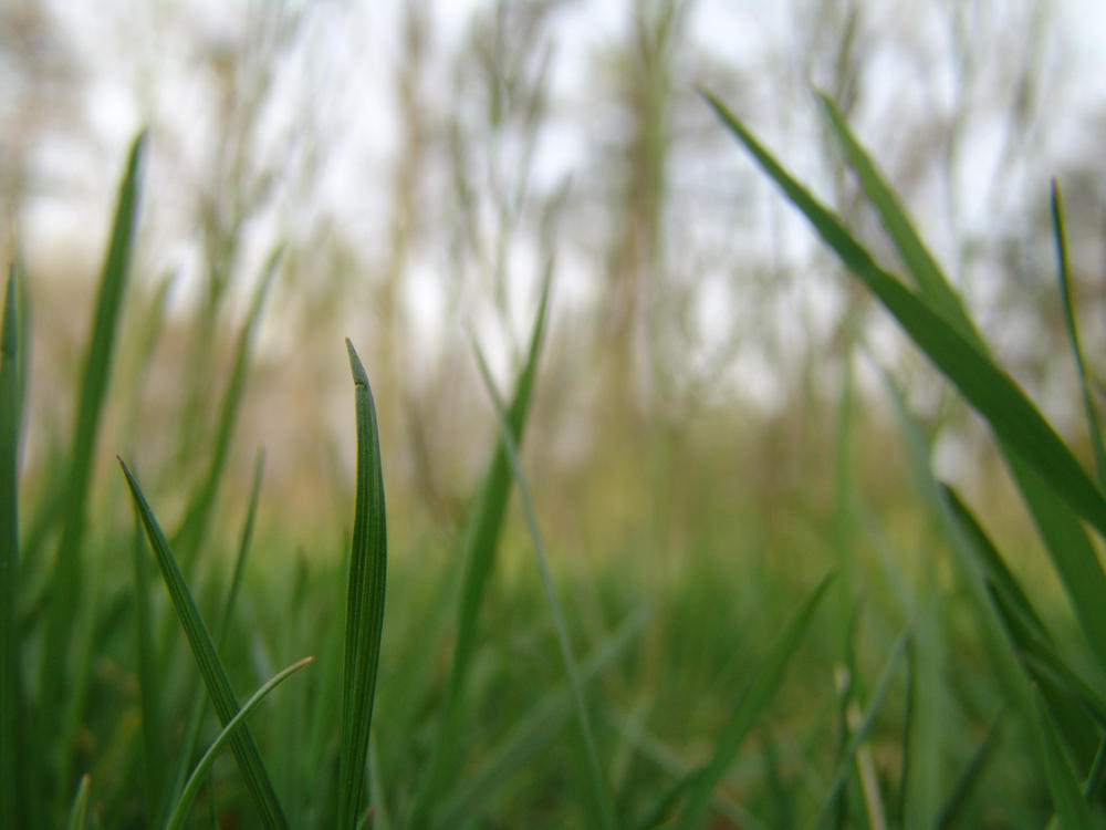 My-Stock - Grass by my-stock
