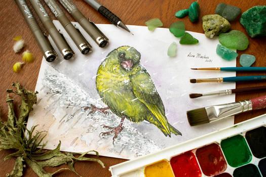 Day #2: Greenfinch (Chloris chloris)