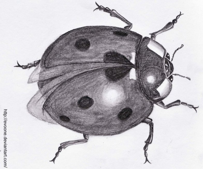 Realistic ladybug drawing - photo#20