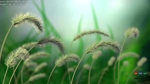 A wild plant