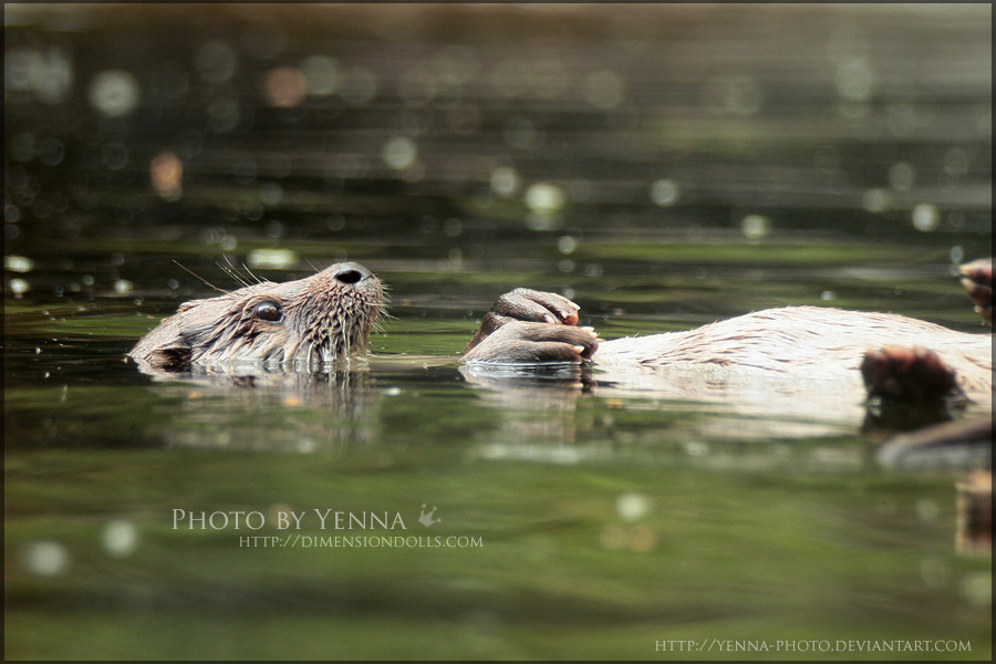 Float by yenna-photo