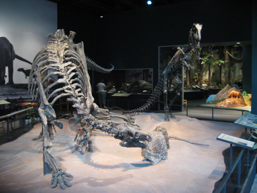 Allosaurus and Camptosaurus by CaptainoftheHarem