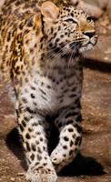 Leopard by PaintIt13lack