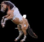 Rearing Horse Precut