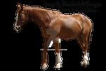 Sorrel Horse Precut