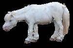 Pre-cut Miniature Horse