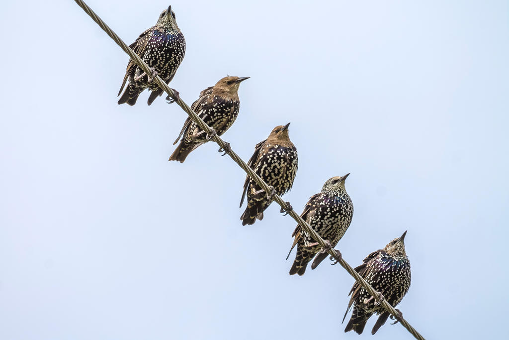 Starlings in autumn by alex1nax