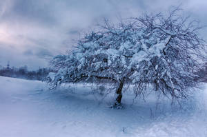 Covered With Snow by alex1nax