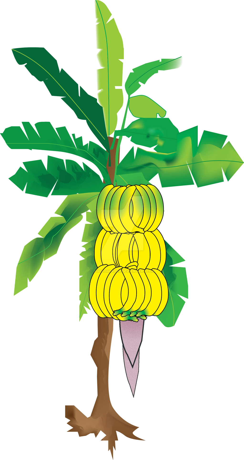 banana tree drawing png - photo #9