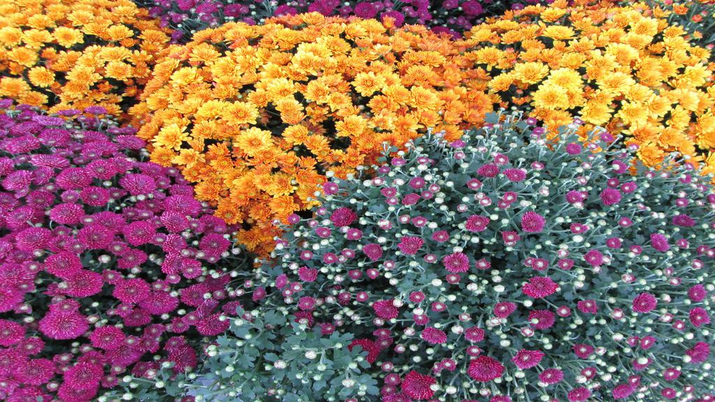 Flowers Stock 1 - 1920x1080 by jaidaksghost