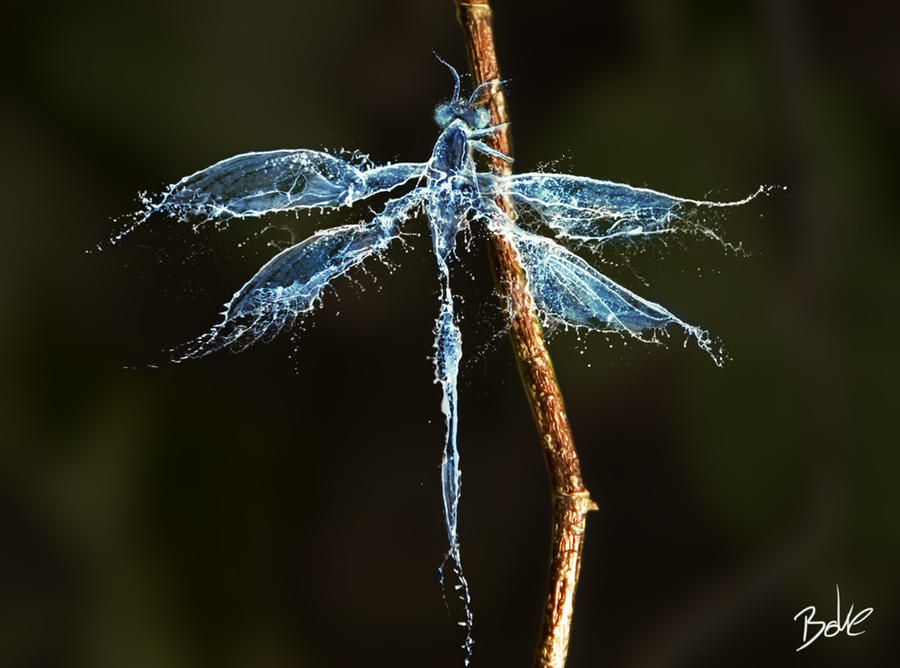 Water Dragonfly