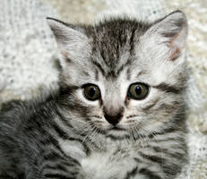 Cat 1 by KarinClaessonArt
